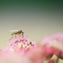nature, flowers, insect