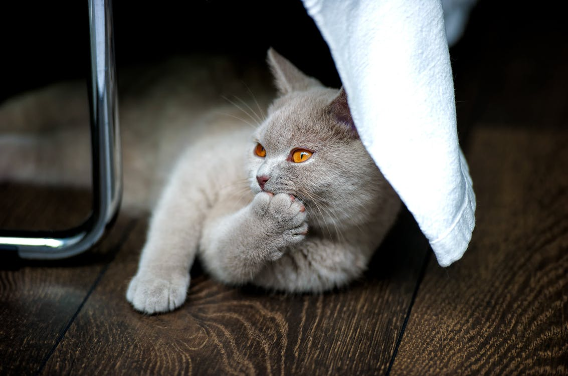 Grey Cat on Brown Textile Beside Stainless Steel Rod