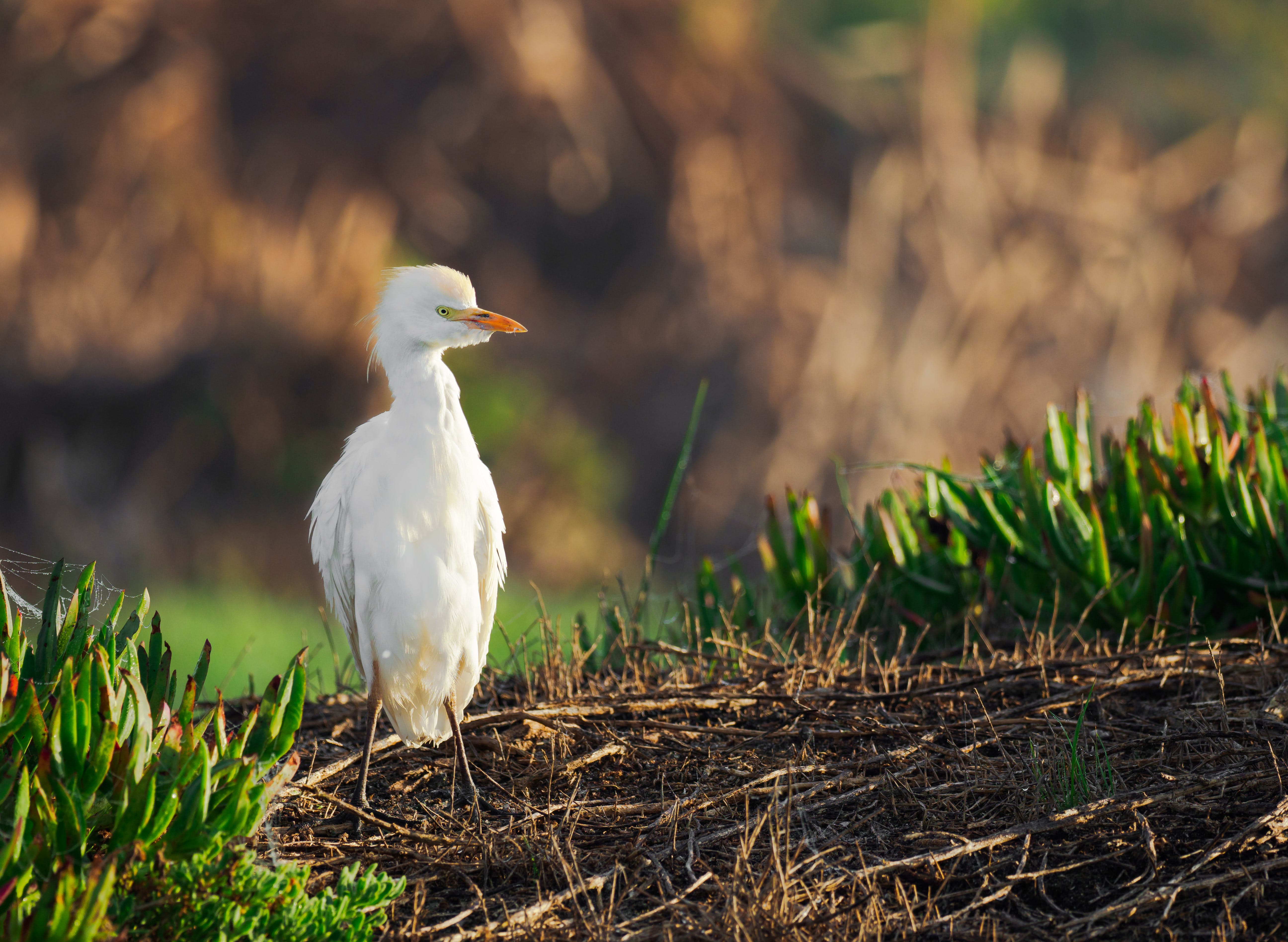 Selective Focus Photography of White Bird on Ground
