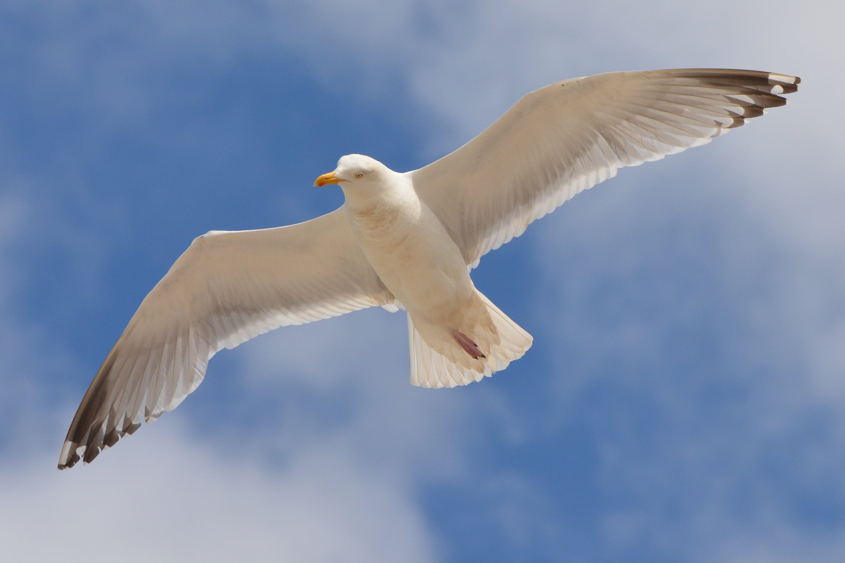 White Bird Flying Under the Blue and White Sky during Daytime