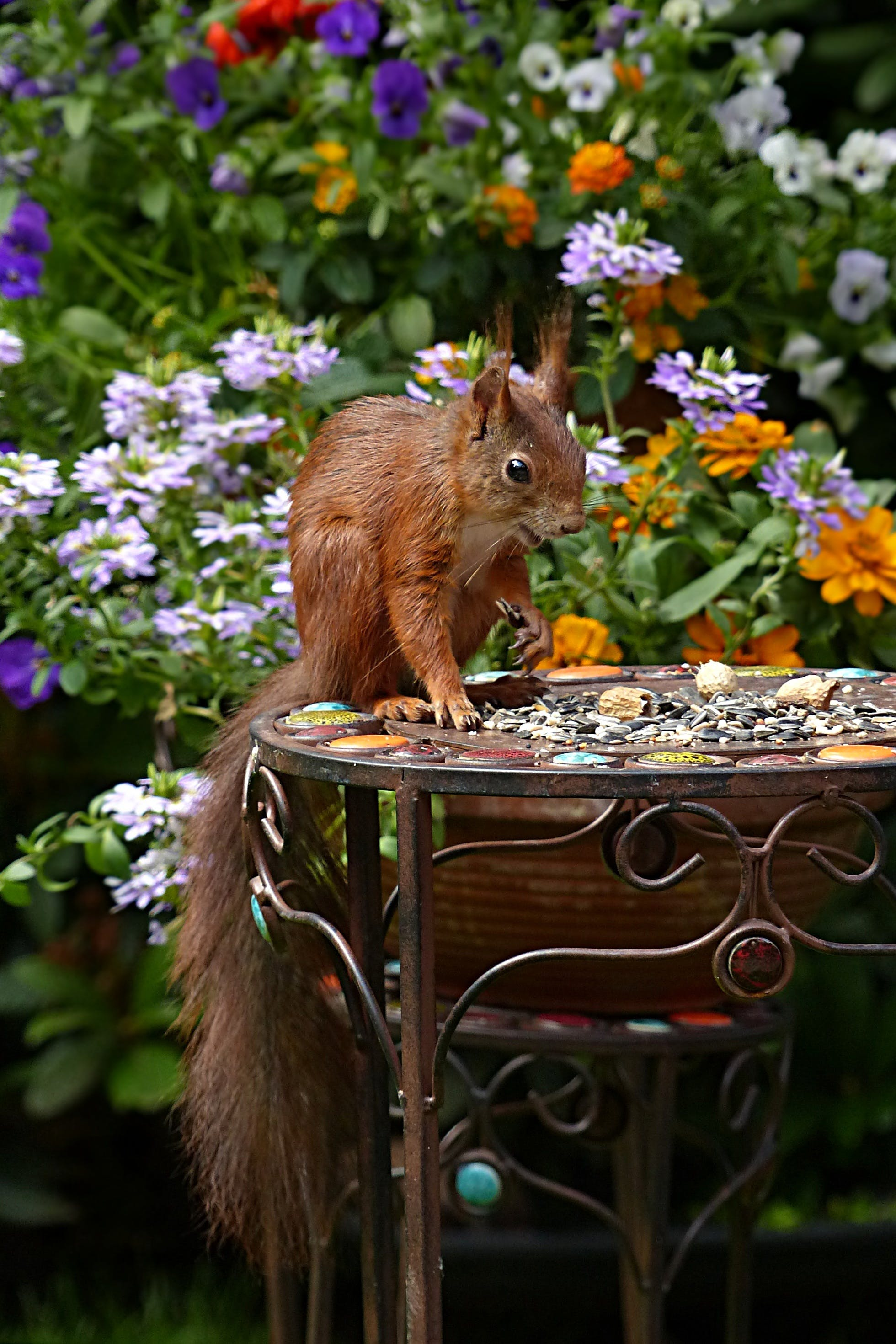 Brown Squirrel in Black Metal Round Table during Daytime