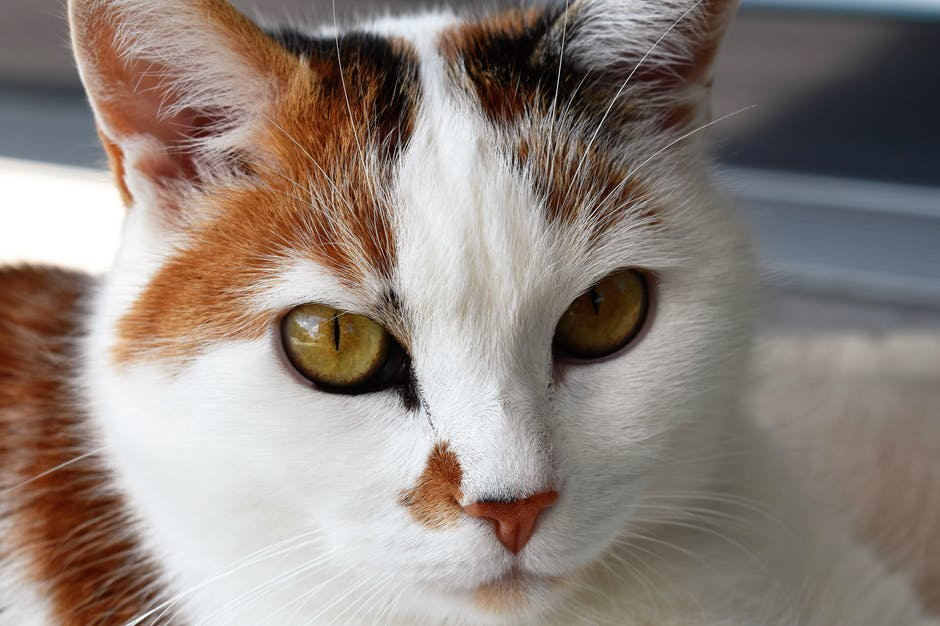 New free stock photo of animal, pet, eyes