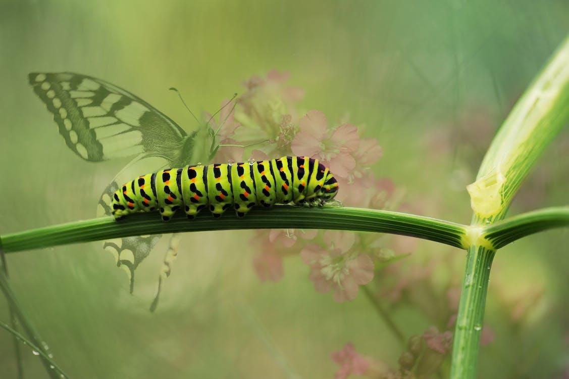 Green Caterpillar on Green Plant Stem