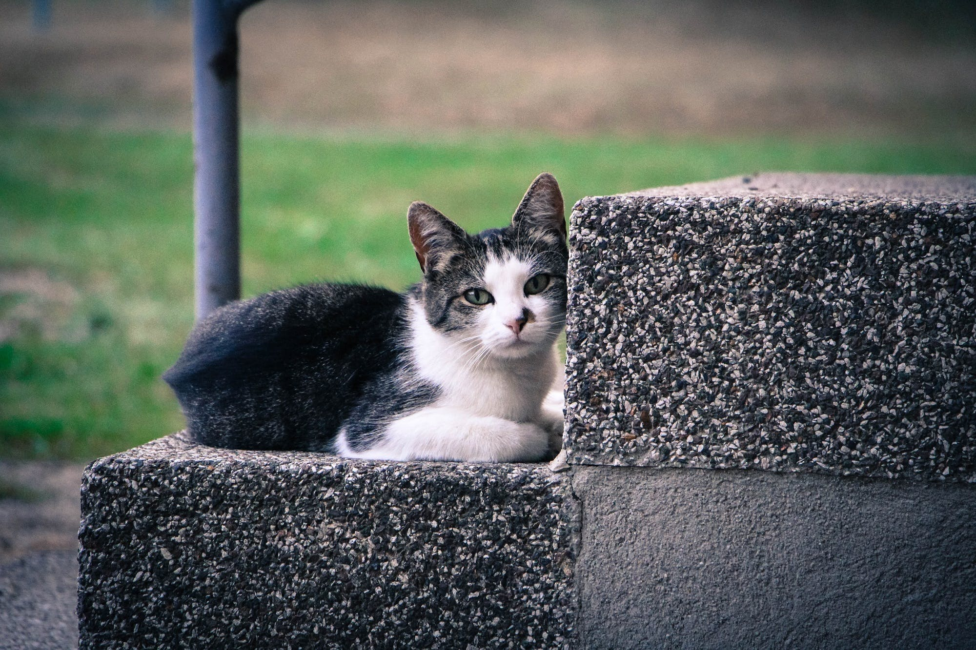 Black and White Kitten Lying on Gray Concrete Stair