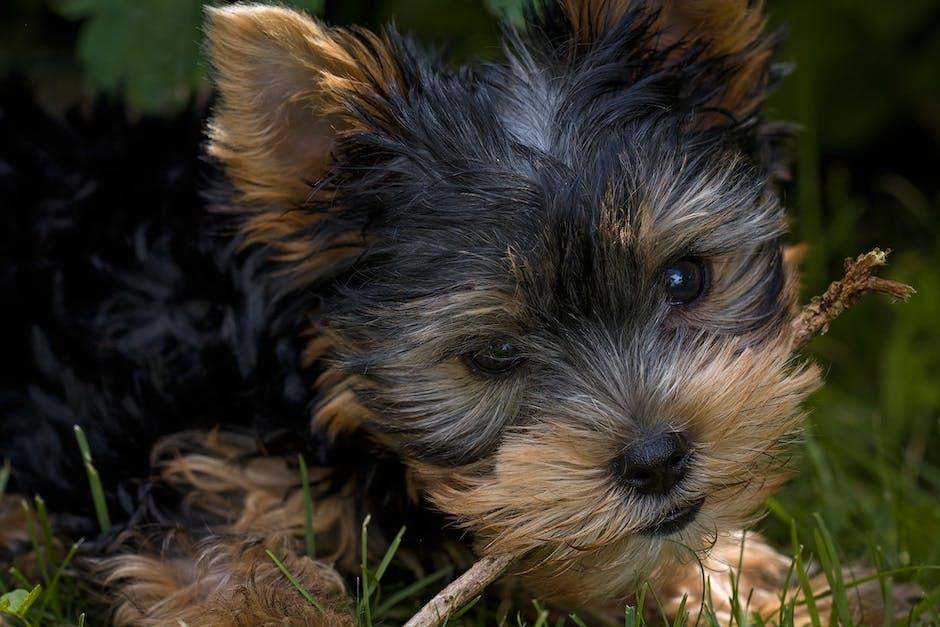 Black and Tan Short Coat Small Size Dog