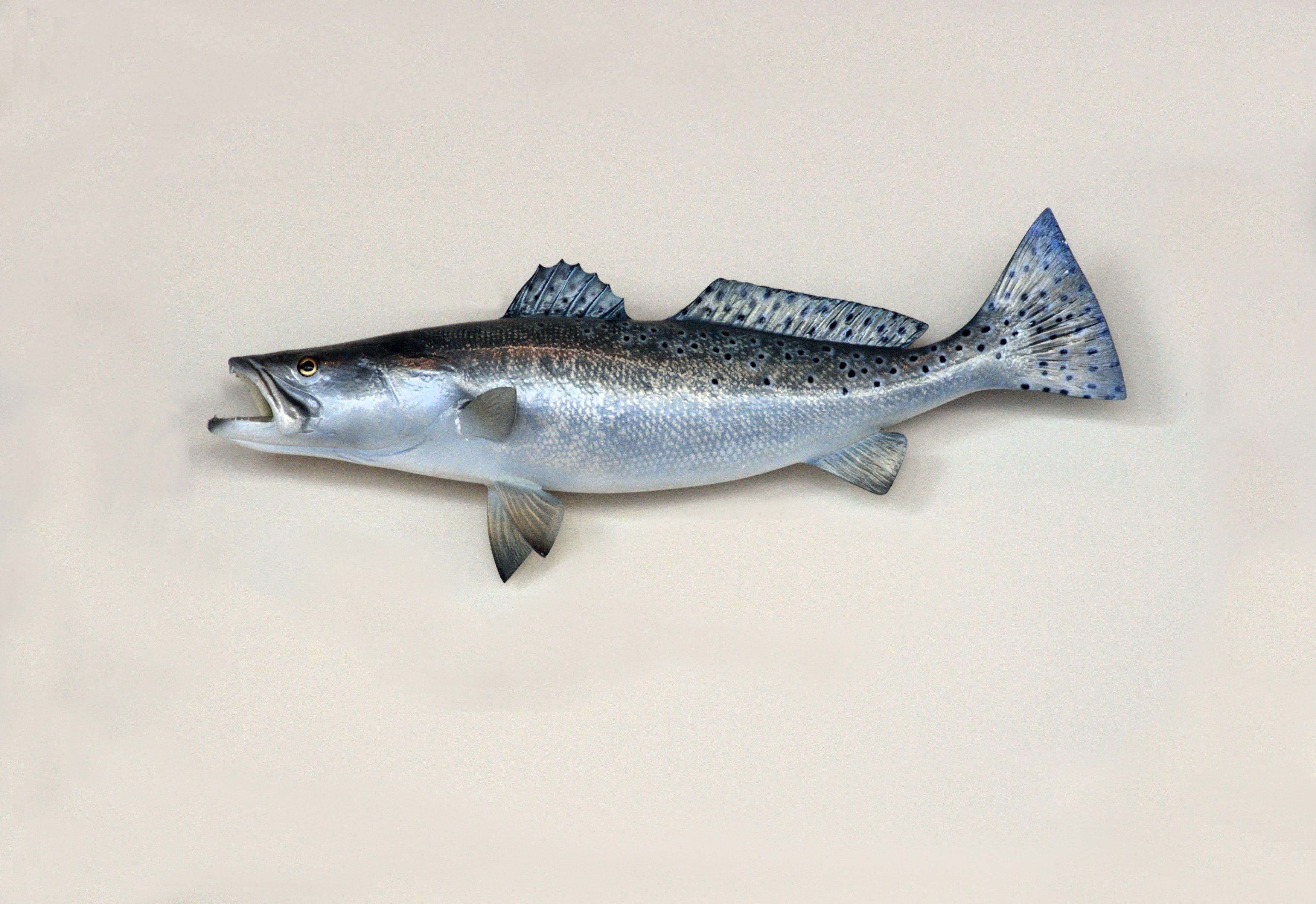 Free stock photo of food, fishing, sea, red