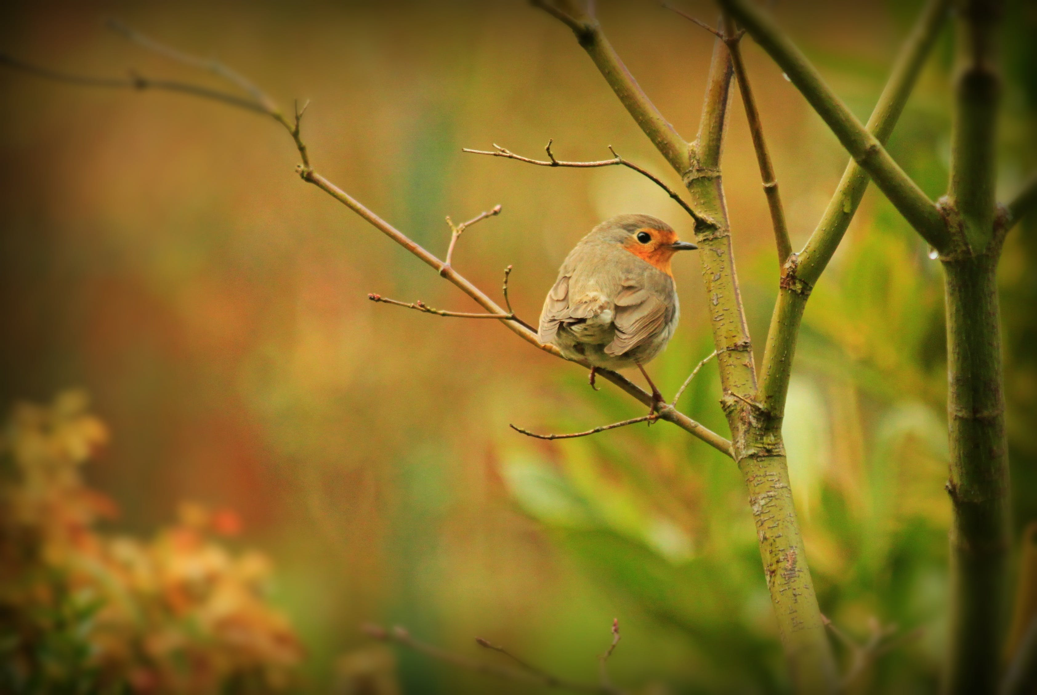 Selective Focus Photography of Grey Bird in Tree Branch