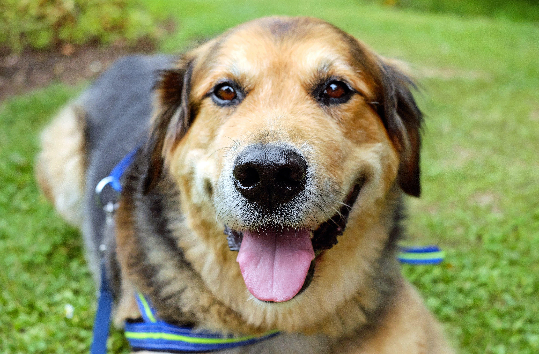 Brown and Black Medium Size Dog