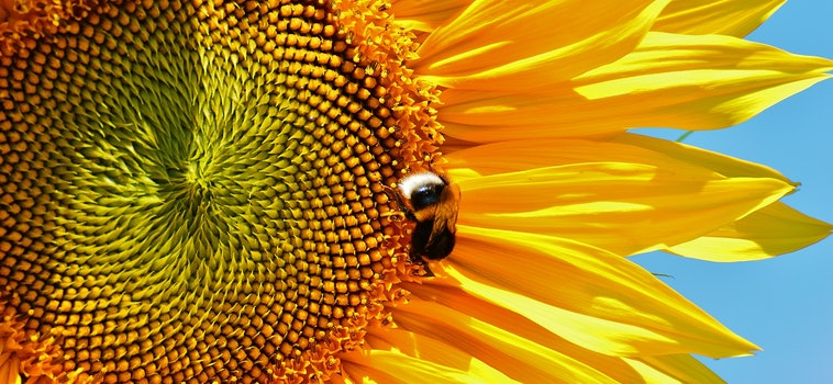Free stock photo of sunny, plant, flower, bee