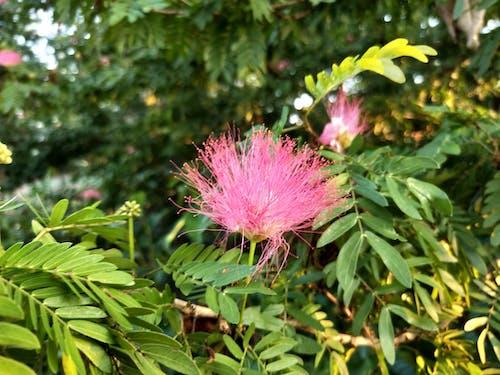 Základová fotografie zdarma na téma zajímavá květina