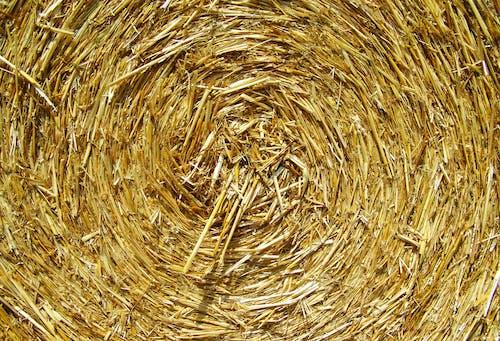 คลังภาพถ่ายฟรี ของ พืชผล, ฟางมัด, หญ้าแห้ง, แห้ง