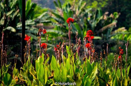 天性, 美在自然中, 美麗的花朵 的 免費圖庫相片