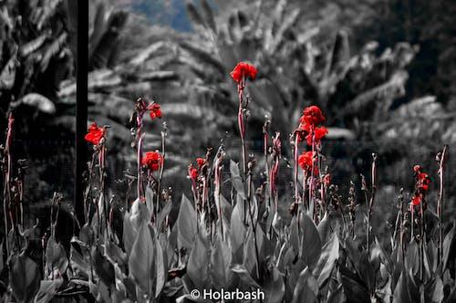 天性, 美在自然中, 花, 顏色飛濺 的 免費圖庫相片