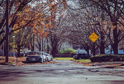 Foto d'estoc gratuïta de aparcat, arbres, carrer, carretera