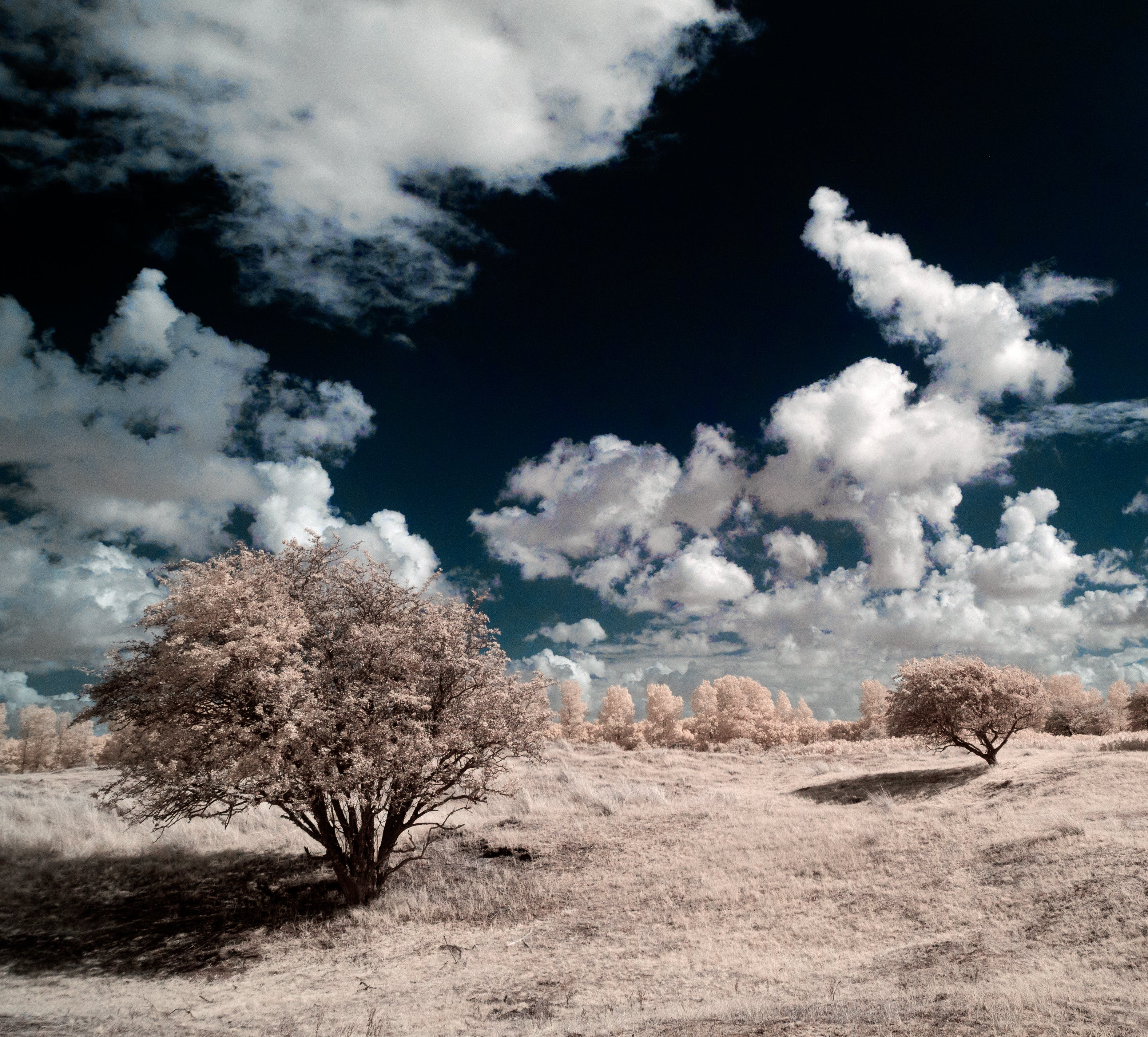 Free stock photo of clouds, false colors, infrared, landscape