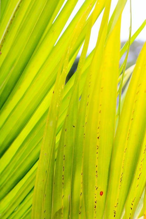 Ingyenes stockfotó absztrakt fotó, zöld, zöld levelek témában