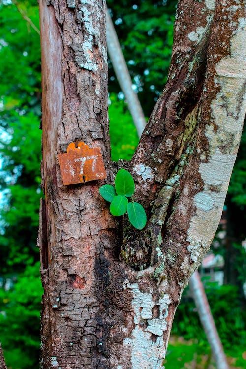 Ingyenes stockfotó fa, fák, gyár, szám témában