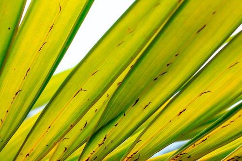Ingyenes stockfotó pálmafa, zöld levelek témában