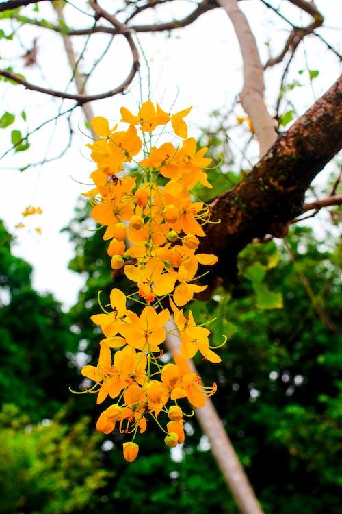 Ingyenes stockfotó fa, kert, park, sárga témában
