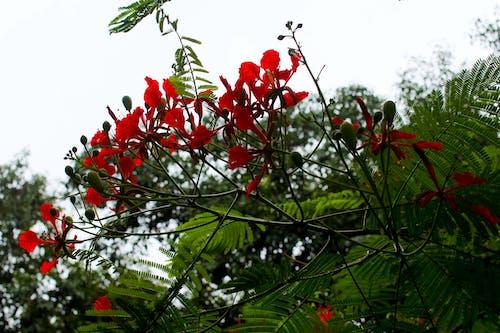 Ingyenes stockfotó ég, kert, piros, piros virágok témában