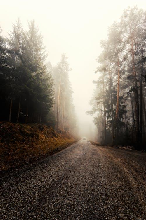 Gray Concrete Roadway Near Trees