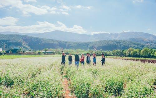 Immagine gratuita di amici, azienda agricola, campo, coltivazione