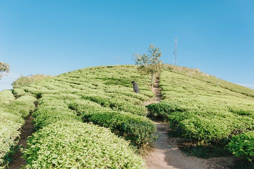 Immagine gratuita di azienda agricola, campo, cielo, coltivazione