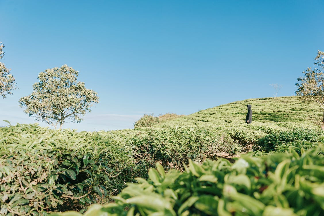 agricultura, área, árvores