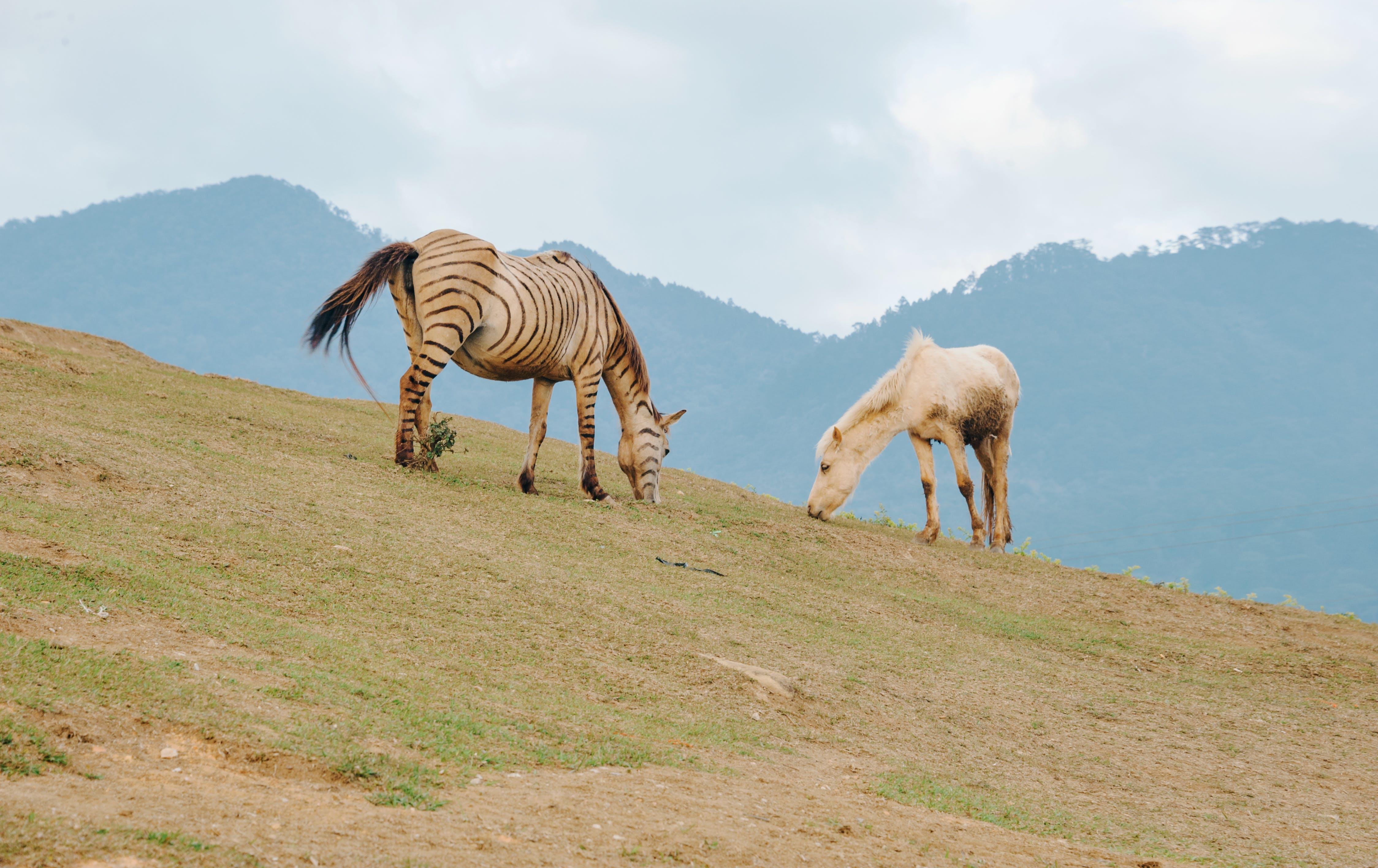 Foto stok gratis bidang, binatang, lansekap, mamalia