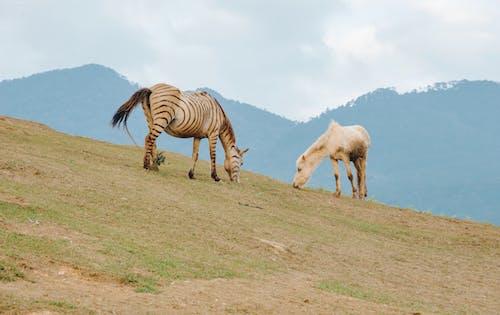 Darmowe zdjęcie z galerii z gospodarstwo, krajobraz, pole, ssak