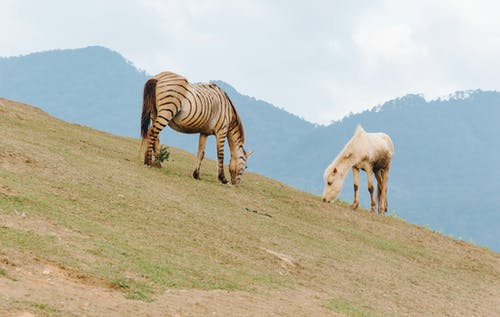 Immagine gratuita di animali, azienda agricola, campo, cavallo