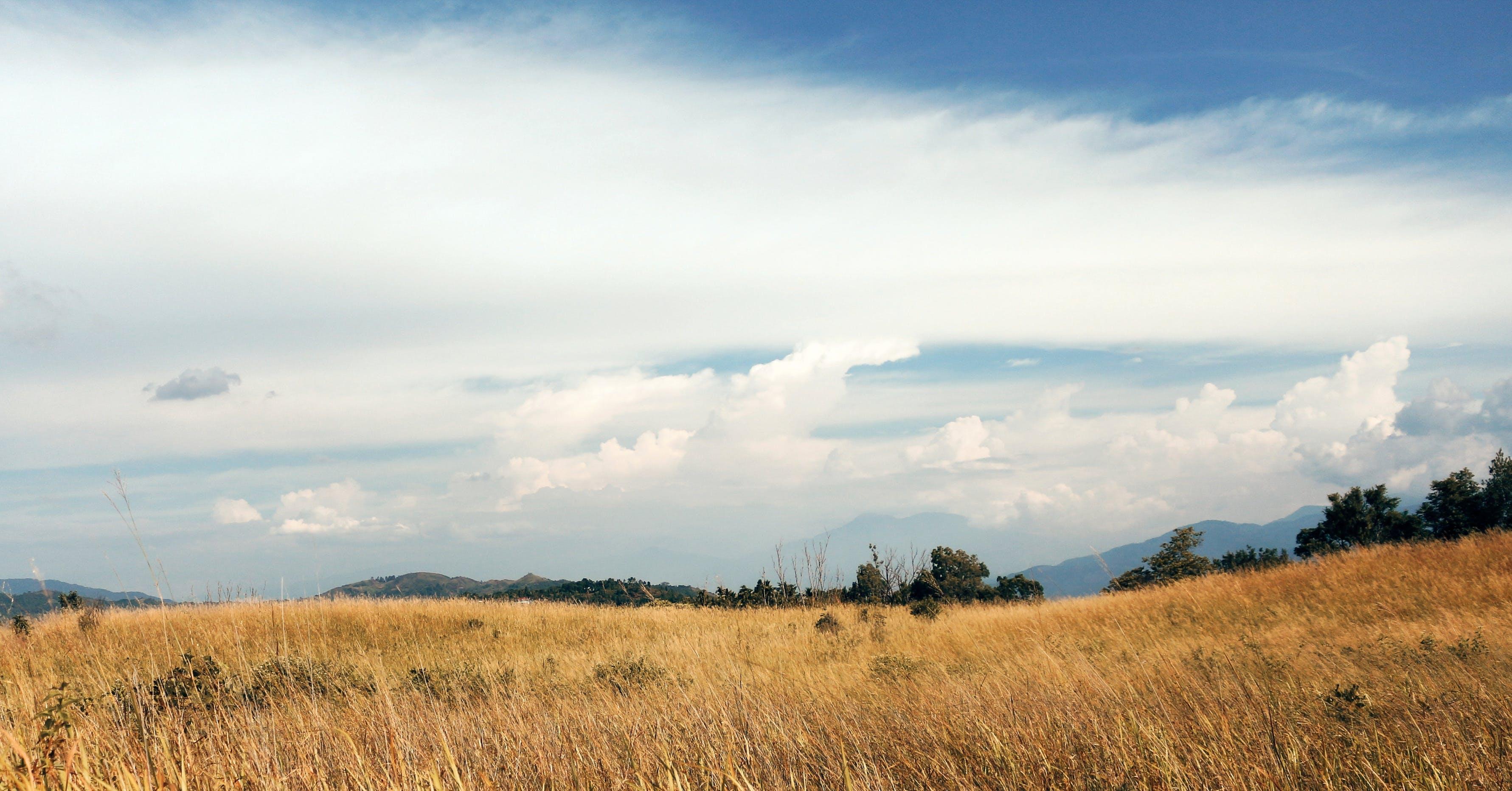 Gratis arkivbilde med blå, himmel, landskap, savana