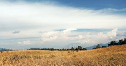 Darmowe zdjęcie z galerii z krajobraz, niebieski, niebo, savana