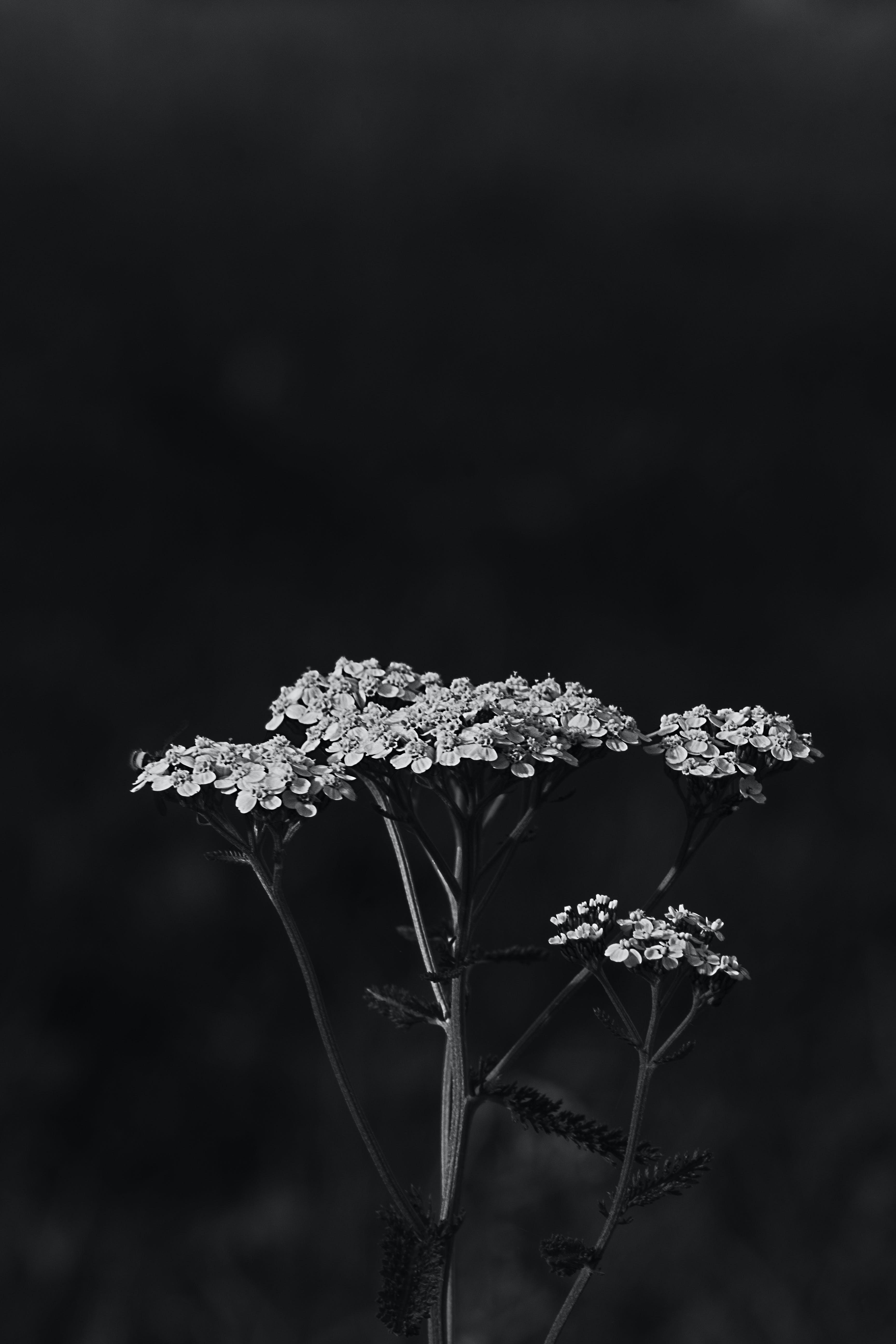 Monochrome Photo of Flowers
