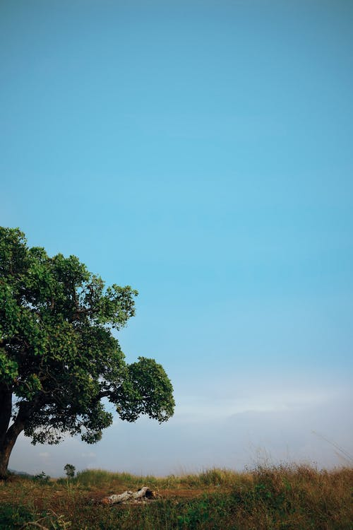 Darmowe zdjęcie z galerii z czyste niebo, drzewo, krajobraz, minimalista