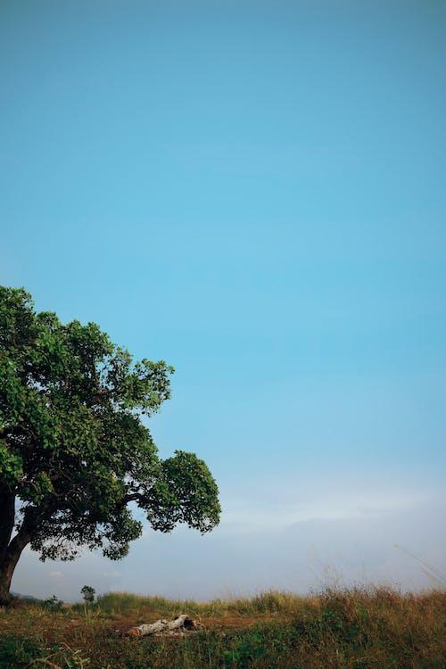 Fotobanka sbezplatnými fotkami na tému jasná obloha, krajina, minimalistický, obloha