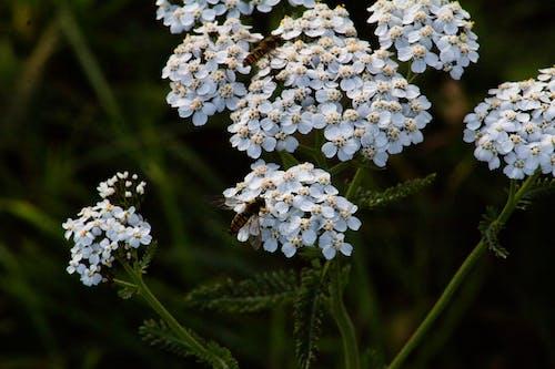 Ingyenes stockfotó állatbarát, élet a természetben, fehér, fehér virág témában