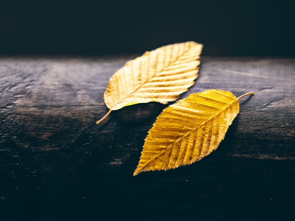 Close-Up Photo of Two Dry Leaves