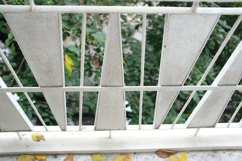 樹, 烤架, 白色, 秋天的顏色 的 免费素材照片