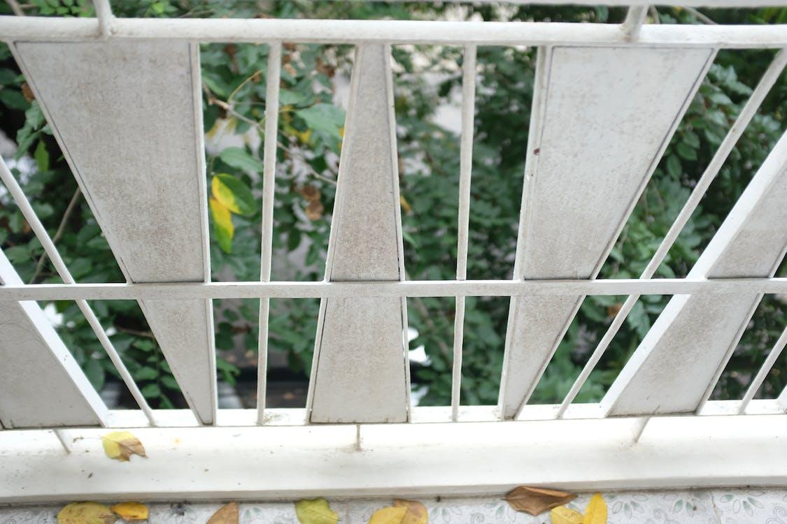 albero, all'aperto, balcone