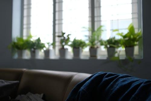 光, 公寓, 失焦, 客廳 的 免费素材照片