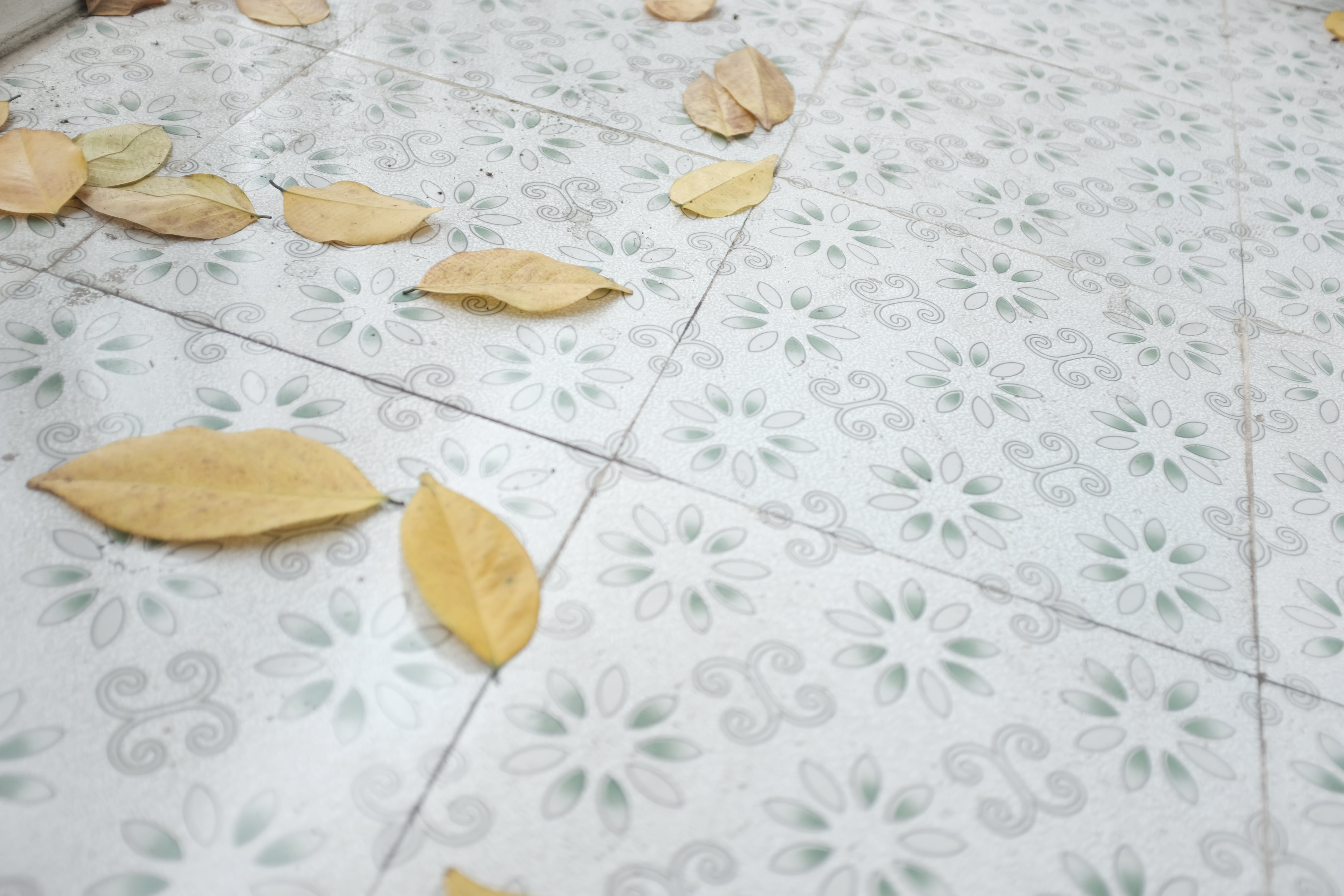 Withered Leaves on Floor