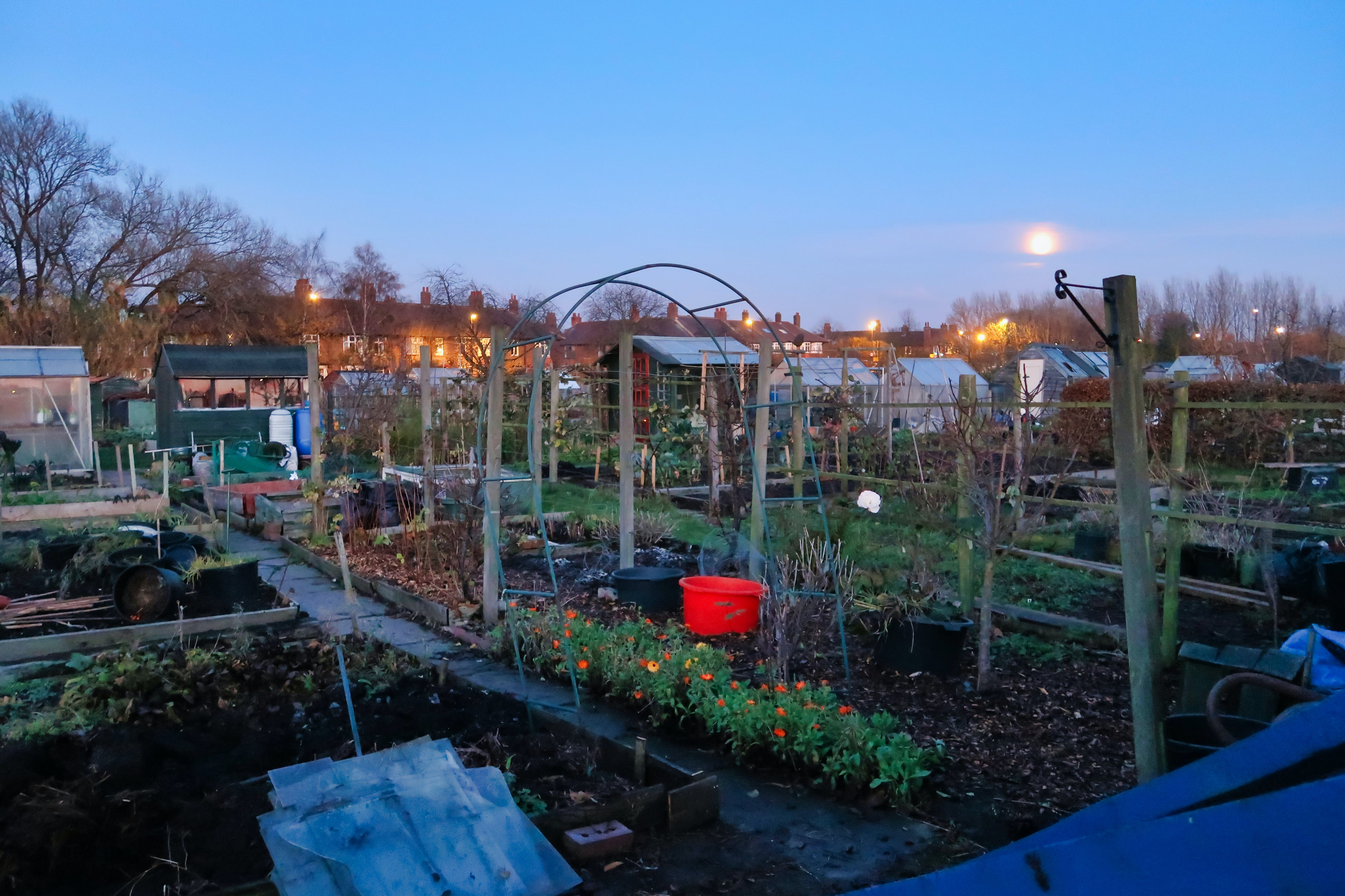 Free stock photo of allotment, blue, Community garden, dark green