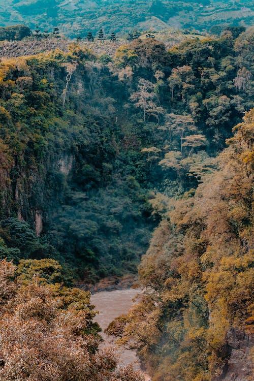 Безкоштовне стокове фото на тему «гори, Денне світло, дерева, зір»