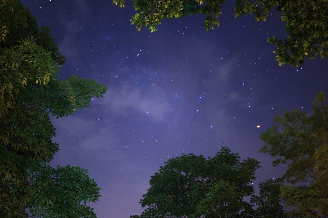 夜晚星空下树木的低角度摄影