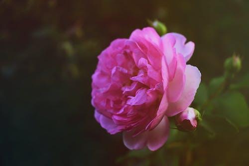 Gratis stockfoto met bloeien, bloem, bloemblaadjes, bloesem