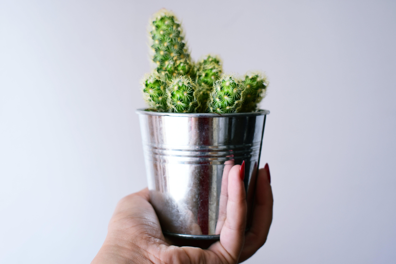 Kostenloses Stock Foto zu büchse, dornen, hand, kaktus