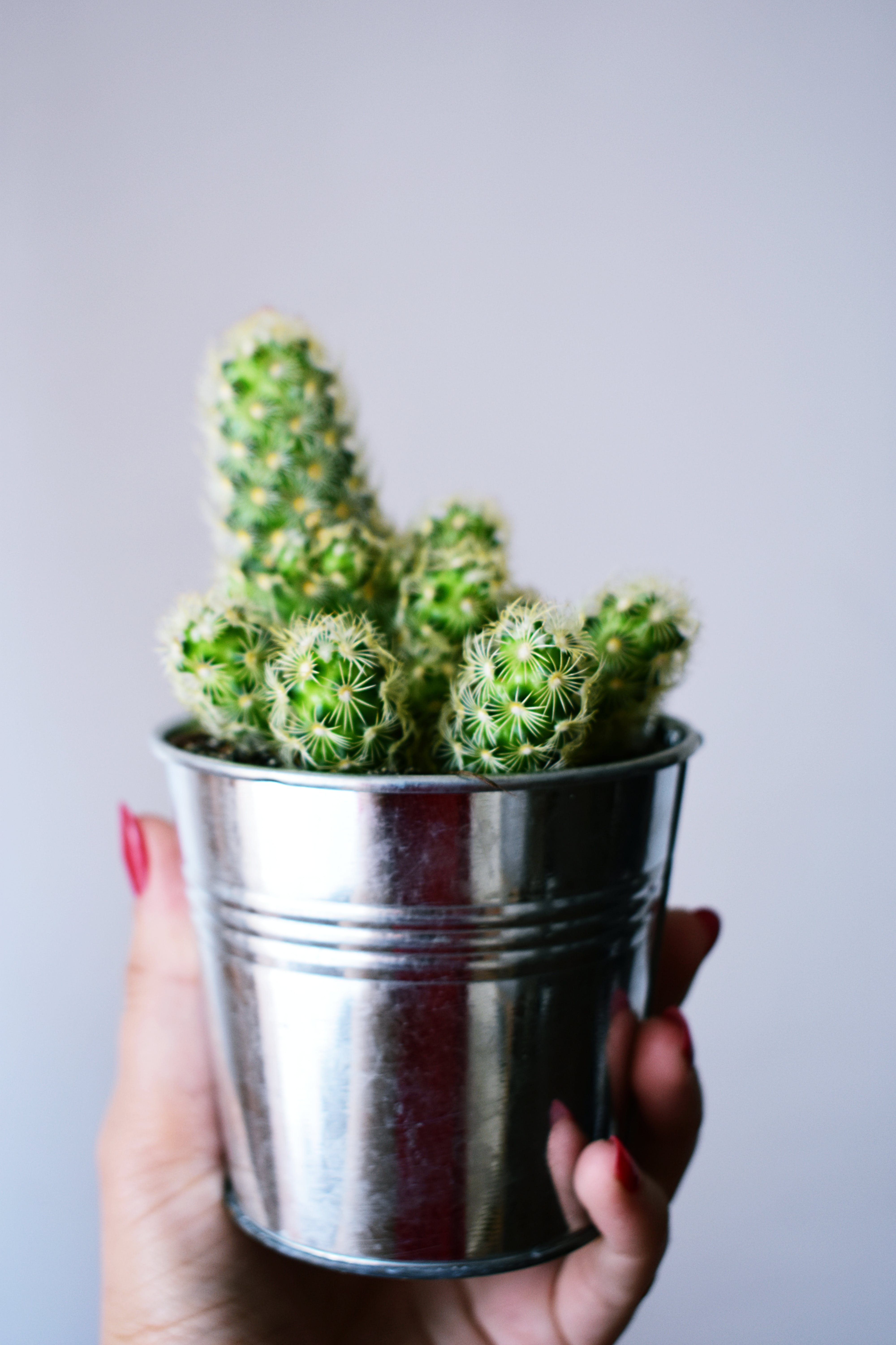 Person Holding Gray Flower Pot With Cactus