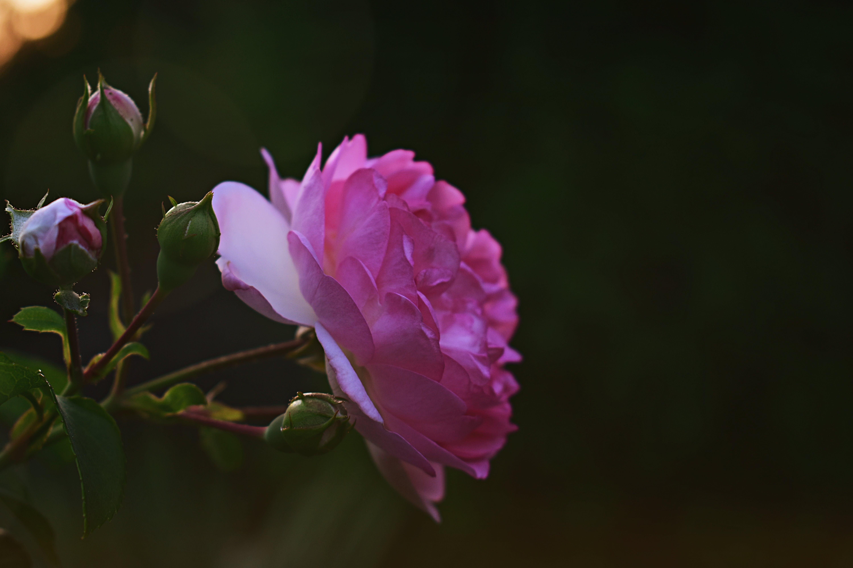 꽃잎, 매크로, 성장, 식물군의 무료 스톡 사진