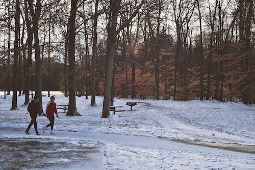 Fotobanka sbezplatnými fotkami na tému chladný, chodník, chôdza, denné svetlo